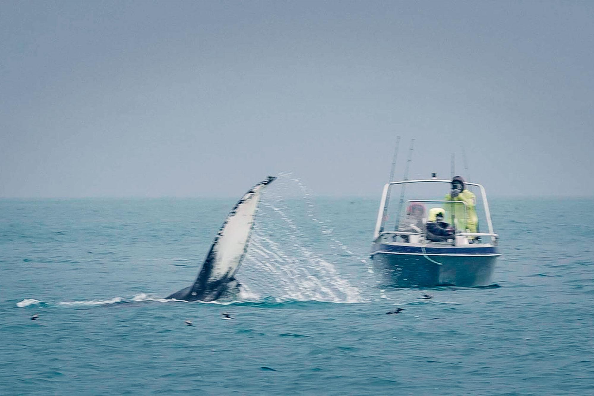 Jakt på nordlyset og opplev exotiske hvaler! . Foto